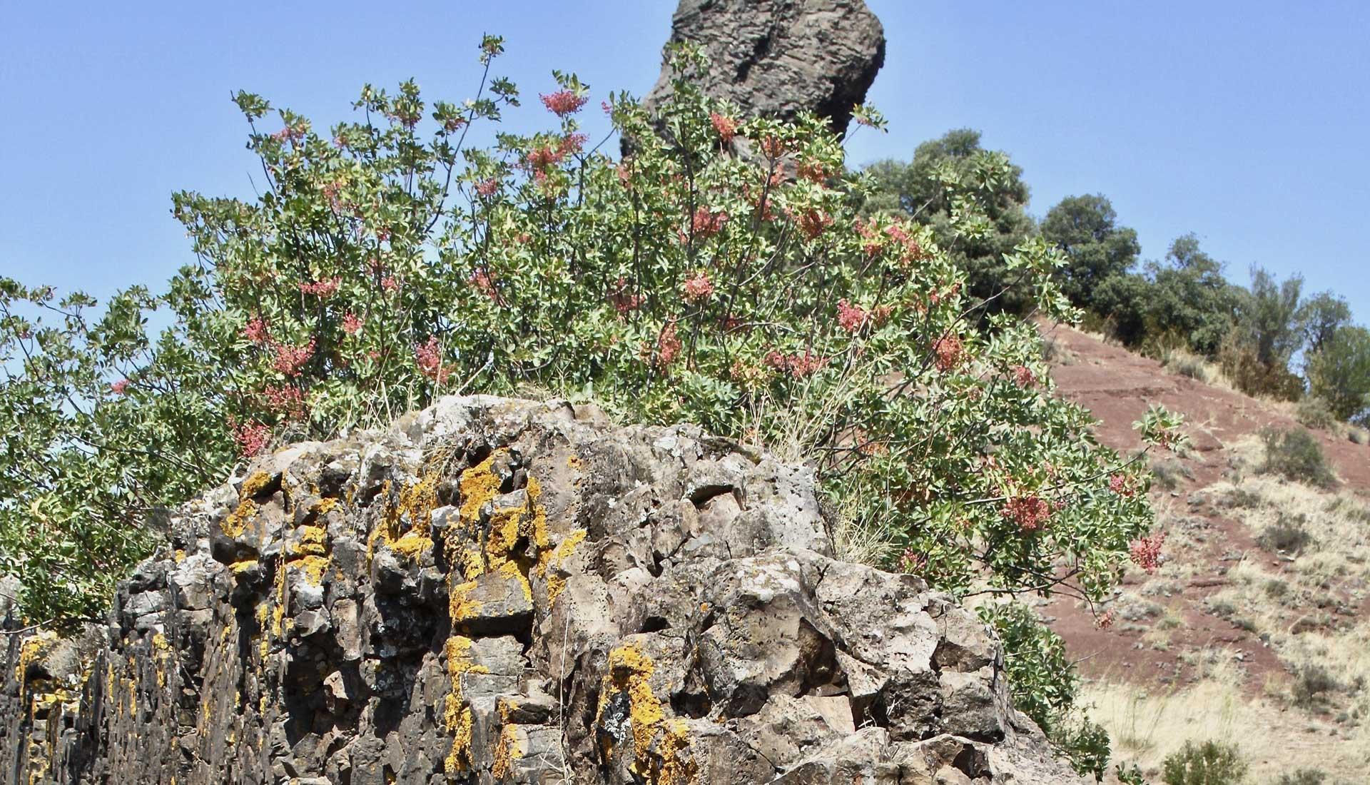 Basalte noir Grand Site Salagou Mourèze © AC Montpellier