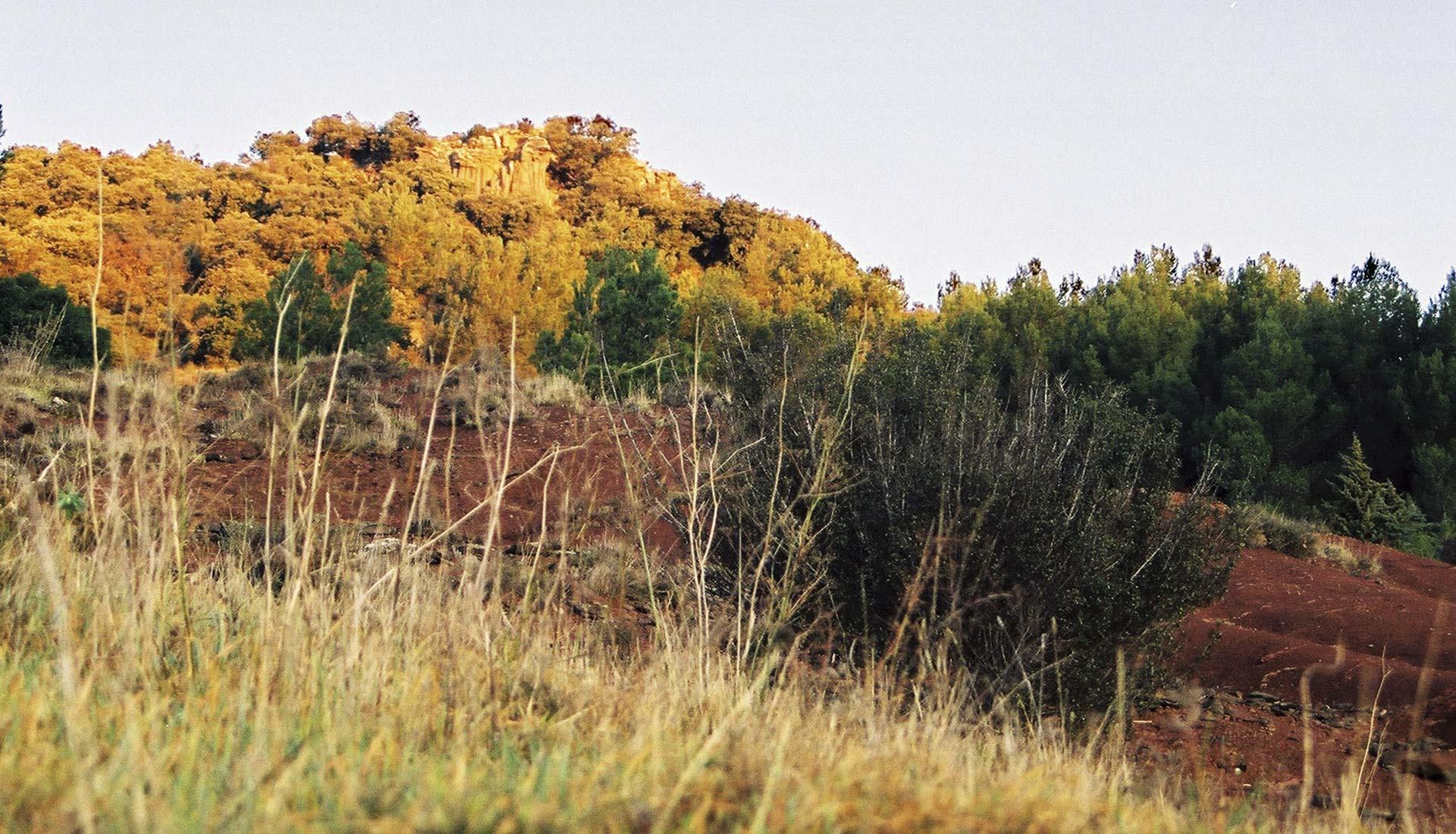 Vegetation et ruffe au Lac de Salagou