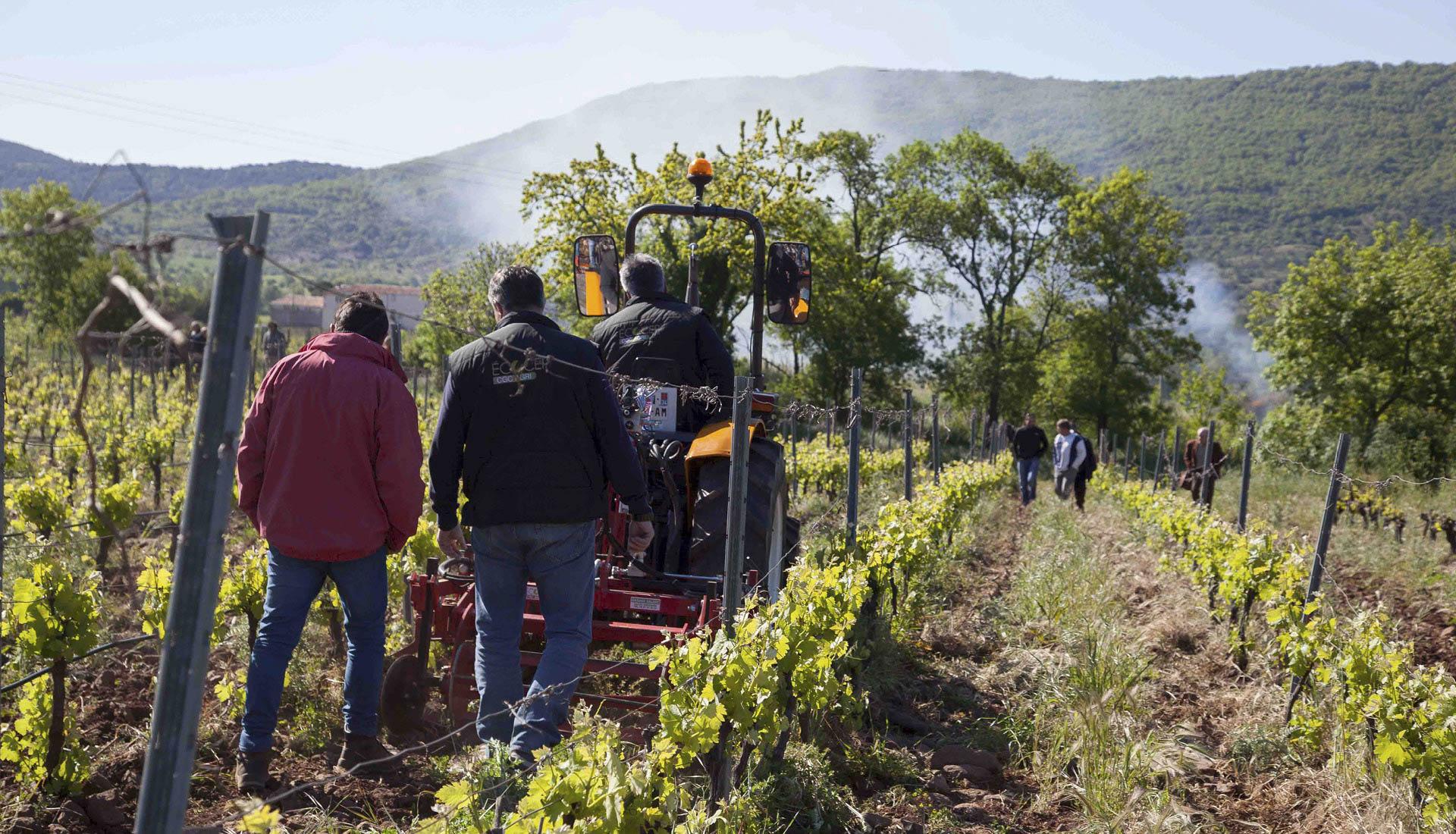 Agriculture et viticulture Grand Site © L.Micola