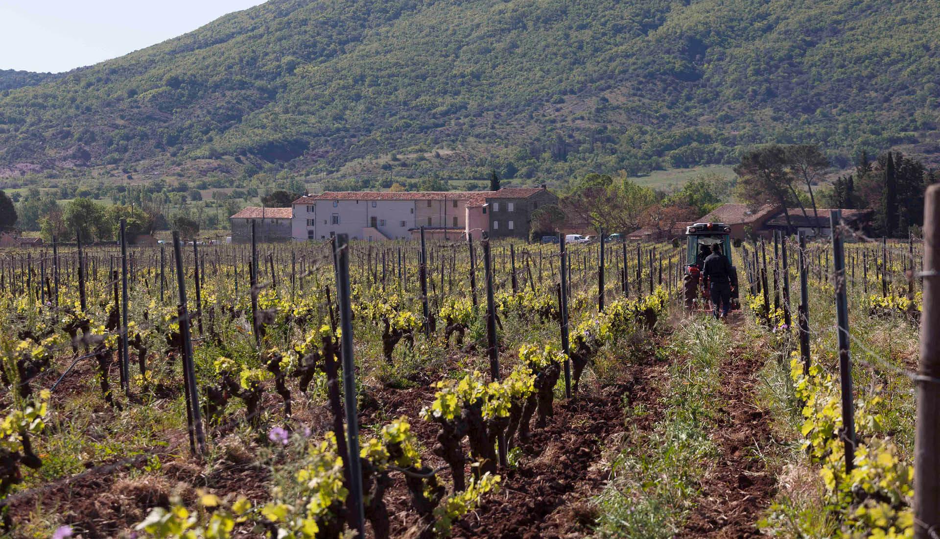 Cultures viticoles Grand Site Salagou © L.Micola 10