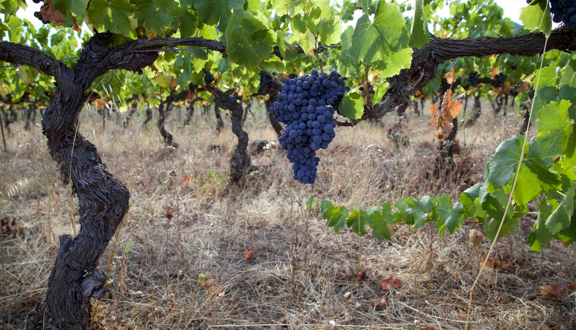 Cultures viticoles Grand Site Salagou © L.Micola 5