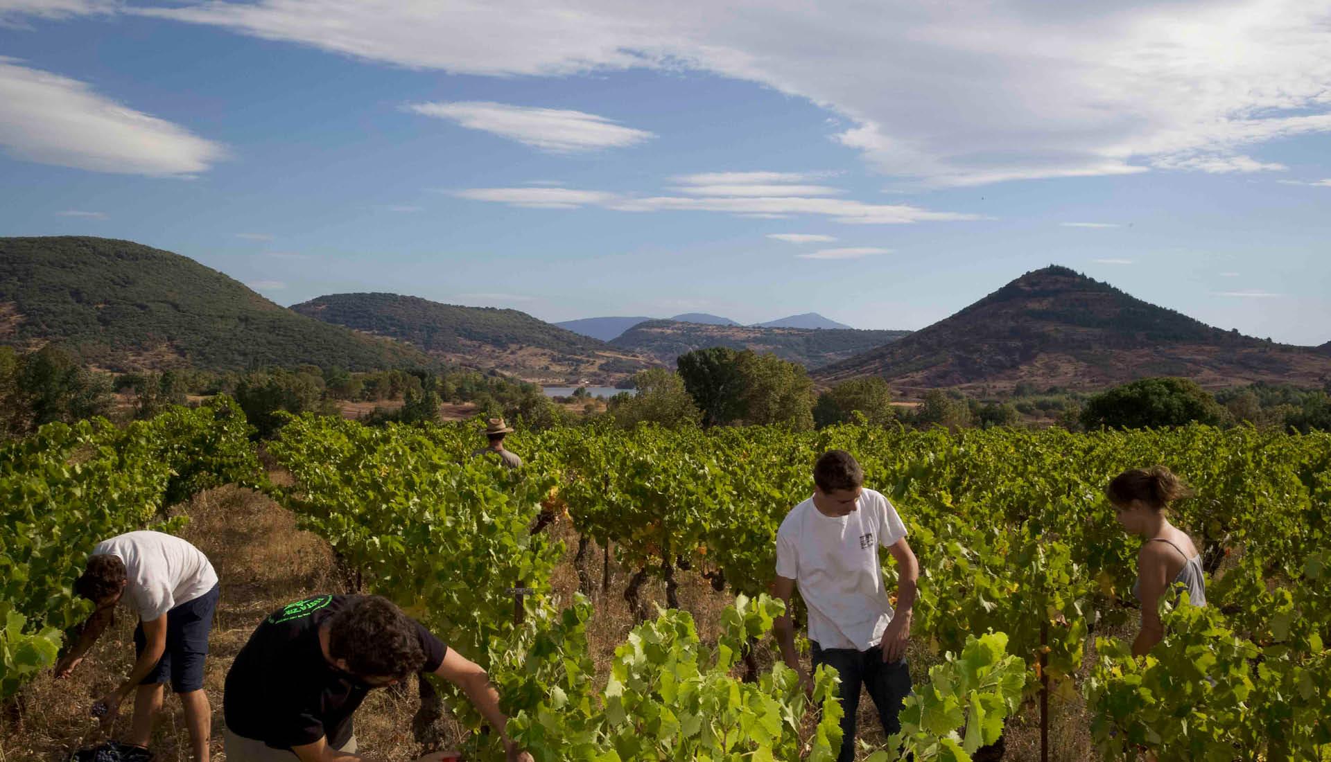 Cultures viticoles Grand Site Salagou © L.Micola 7