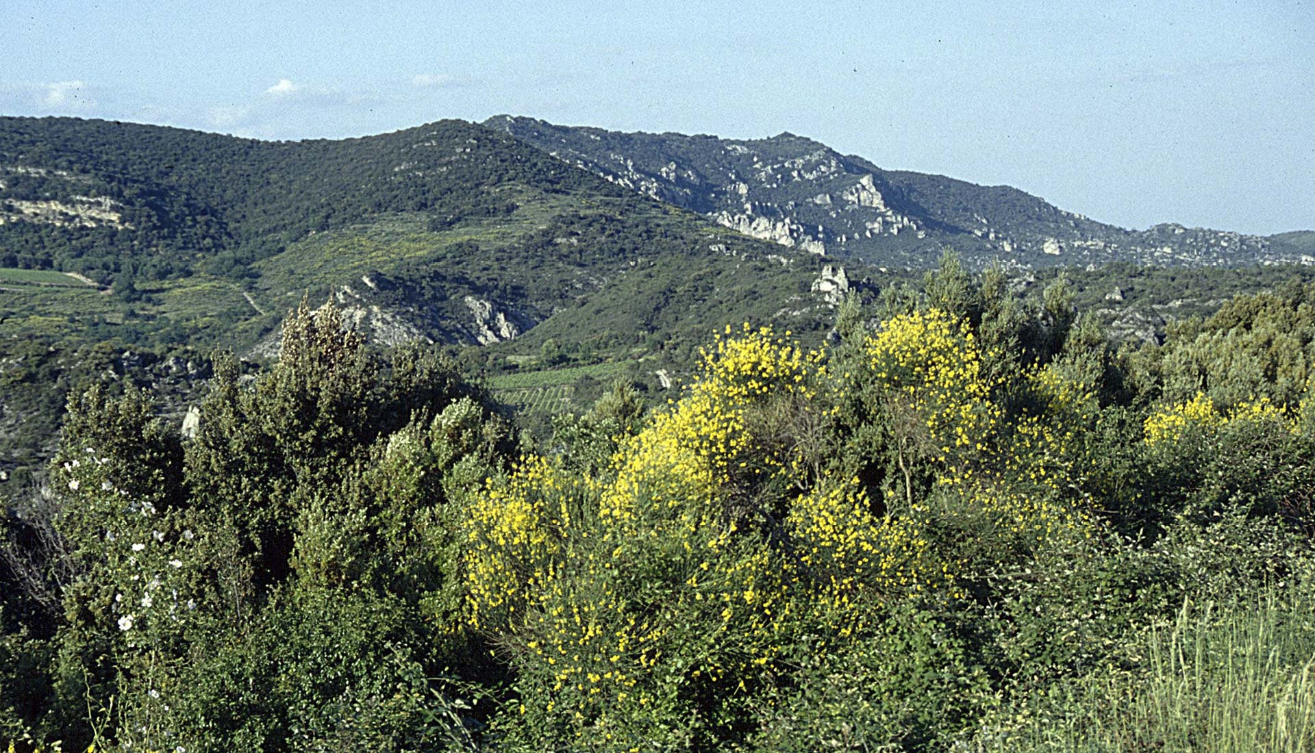 Montagne de Liausson Ziegler175 Wikimedia / CreativeCommons