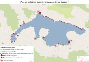 Baignade chevaux Lac du Salagou
