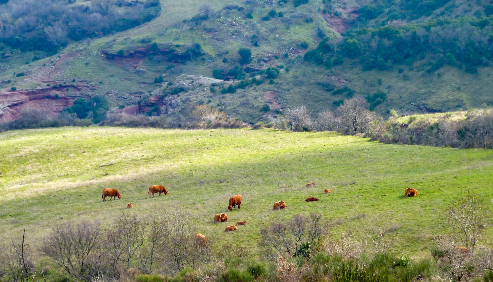 Agriculture elevage Grand Site Salagou © L.Micola 2