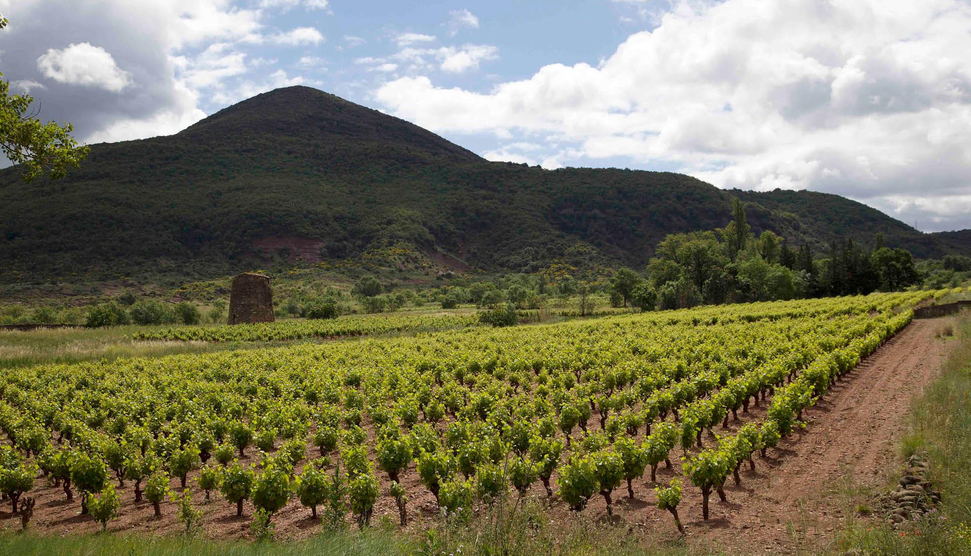Cultures viticoles Grand Site Salagou © L.Micola 1