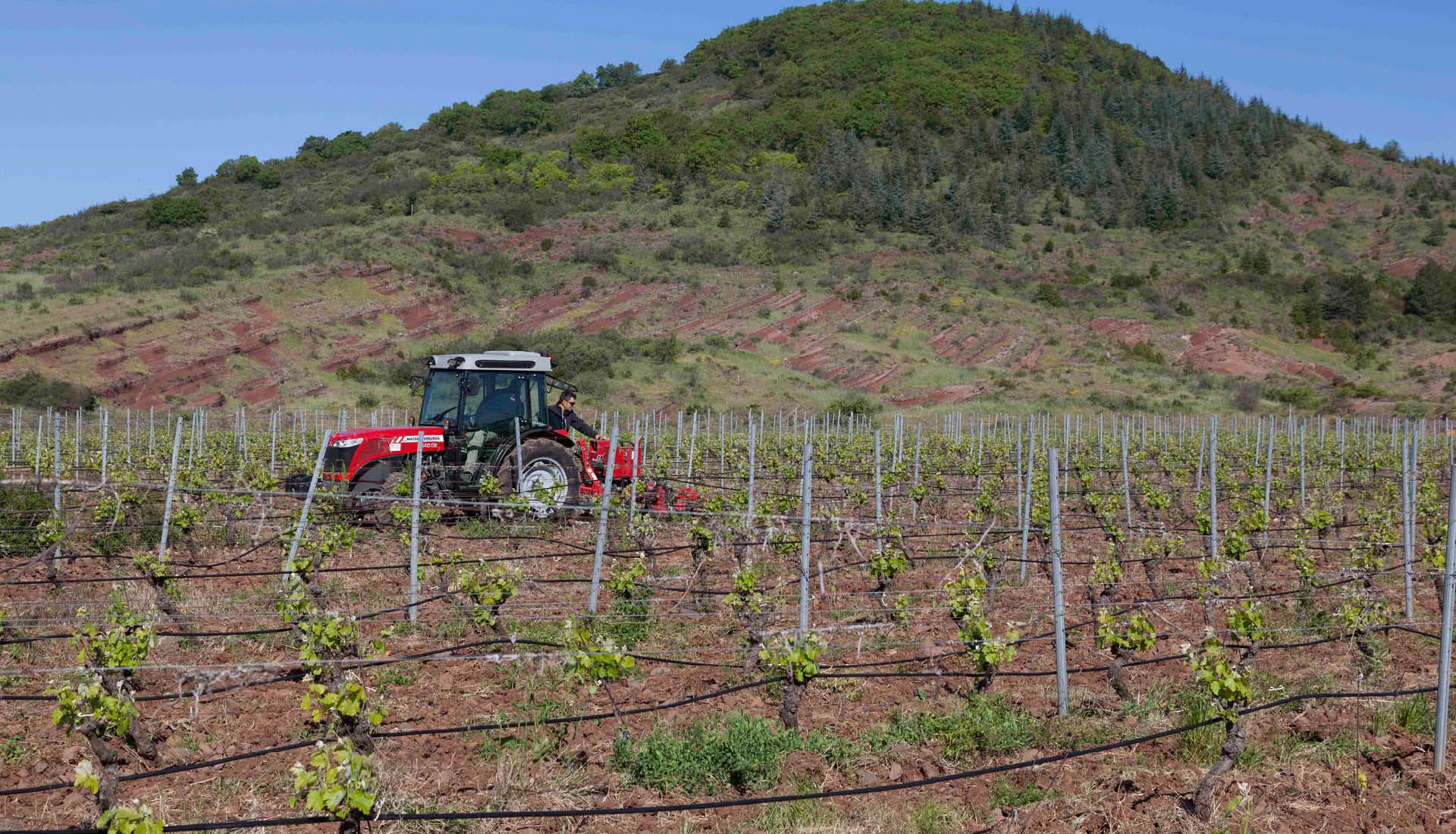 Cultures viticoles Grand Site Salagou © L.Micola 11