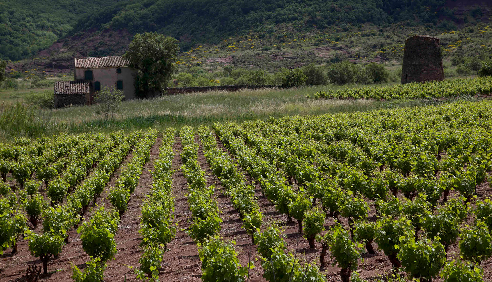 Cultures viticoles Grand Site Salagou © L.Micola 3