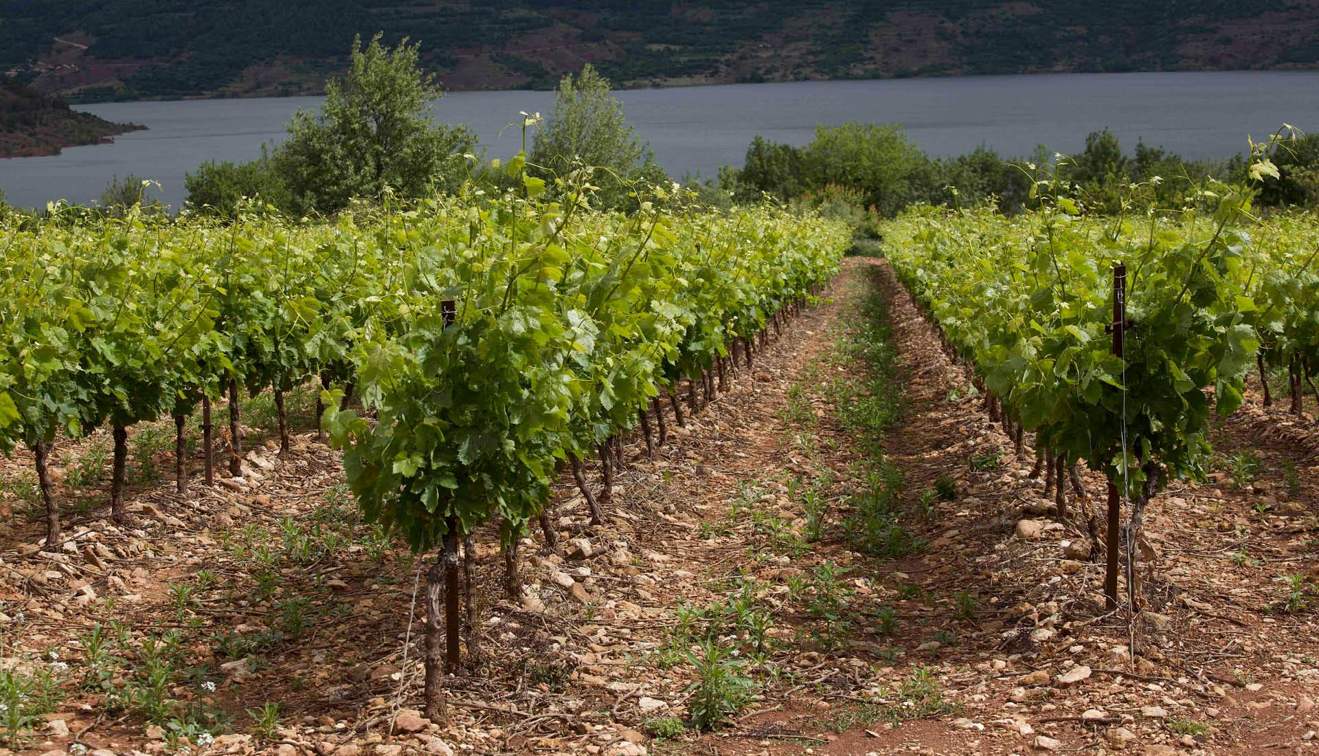 Cultures viticoles Grand Site Salagou © L.Micola 8