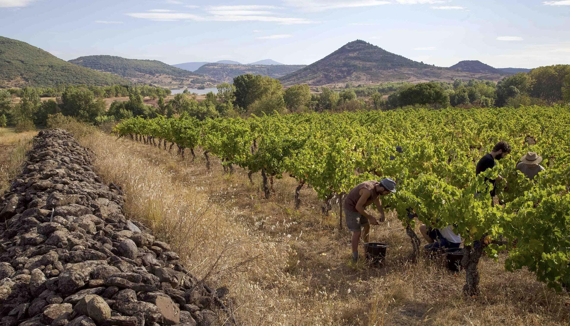 Viticulture Grand Site Salagou © L.Micola